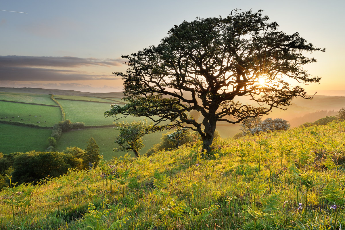 A twisted Hawthorn tree growing in rolling countryside on Winsford Hill, Exmoor, UK. Image © Stephen Spraggon.
