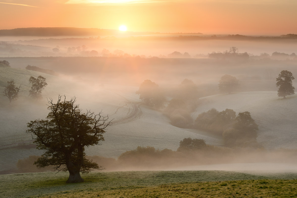 A glorious misty sunrise overlooking fields and trees near Bruton, Somerset, UK. Image © Stephen Spraggon.