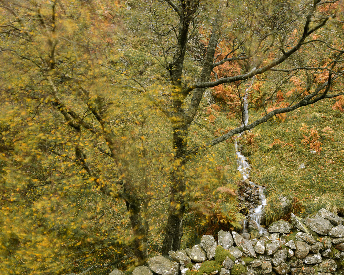 A colourful autumn scene on the flanks of Lingmoor Fell in the Lake District. Image © Stephen Spraggon.