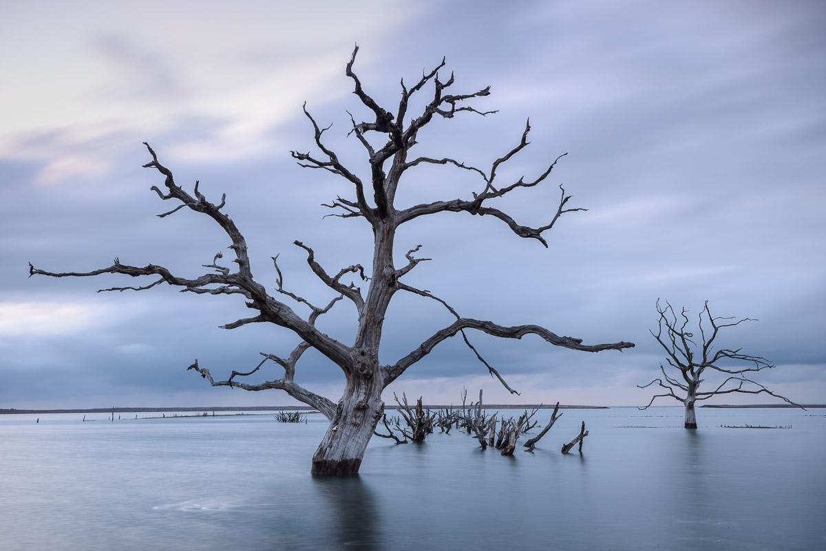 Dead trees surrounded by sea water on the Salt Marsh at Porlock, Somerset, during high tide. Image © Stephen Spraggon.
