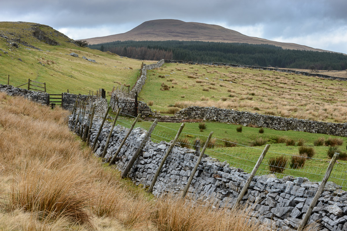 Dry stone walling leading through fields towards Fan Nedd in the Ystradfellte Valley, Brecon Beacons. Image © Stephen Spraggon.