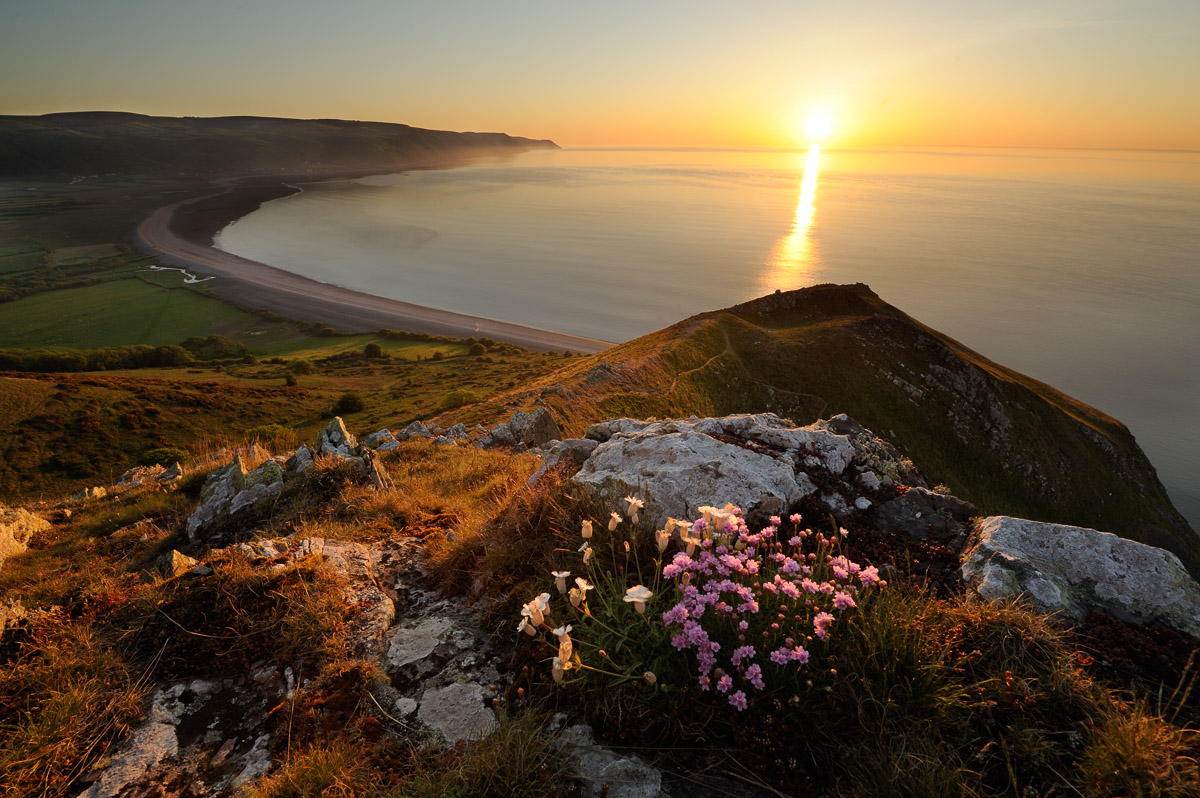 Sea Campion (Silene uniflora) and Thrift (Armeria maritinum) growing on the edge of the hill overlooking Bossington beach, Somerset. Image © Stephen Spraggon.